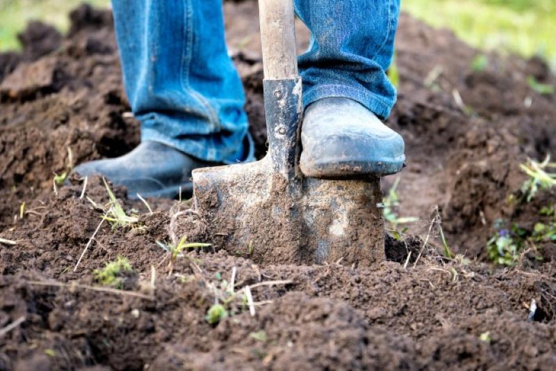Осенняя обработка сада и огорода от вредителей в почве