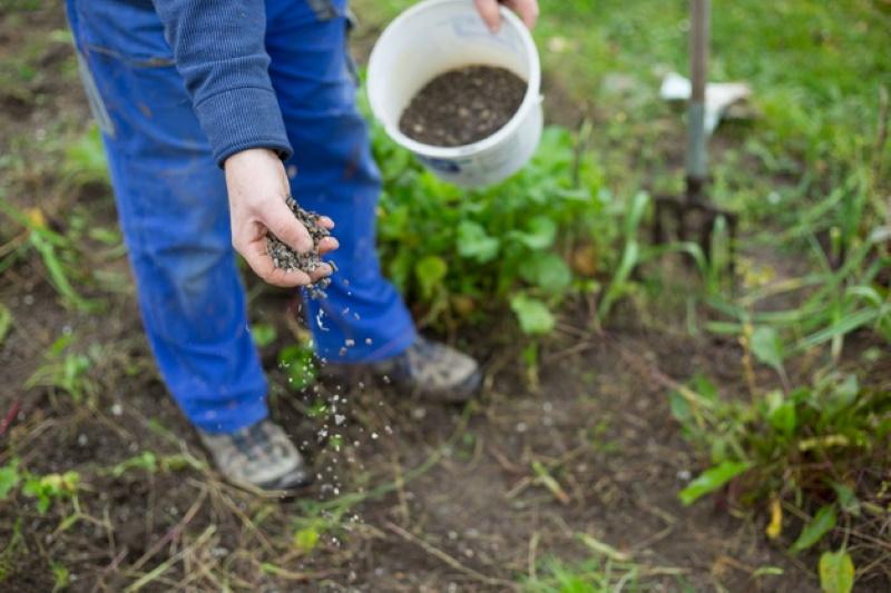 Обработка и удобрение сада и огорода осенью