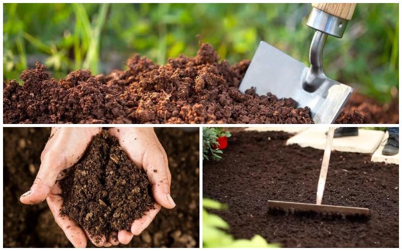 Подготовка почвы к посадке рассады клубники
