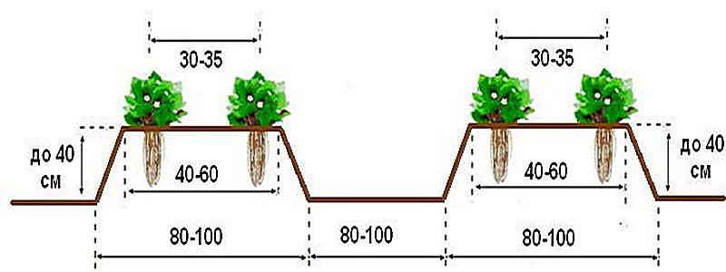 схема посадки клубники дарселект