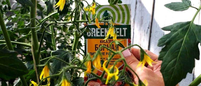 борная кислота для завязи помидоров