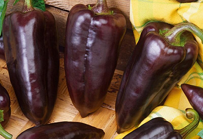 фиолетовый болгарский перец максим