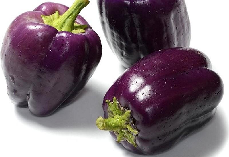 фиолетовый болгарский перец лилак лавендер